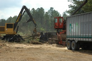 Processing Timber at Logging Deck